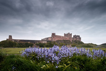 Bluebells And Bamburgh Castle ...