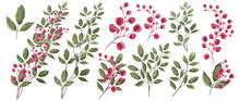 Watercolor Illustration. Botanical Collection Of Wild And Garden Plants. Set: Leaves Flowers, Branches, Herbs And Other Natural Elements. All Drawings Isolated On White Background. Crimson Flowers.