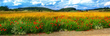Wheat Field With Poppies In Summer