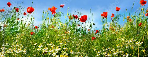 Poster Fleur Flower meadow in summer