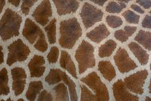 Beautiful Pattern Of Giraffe S...