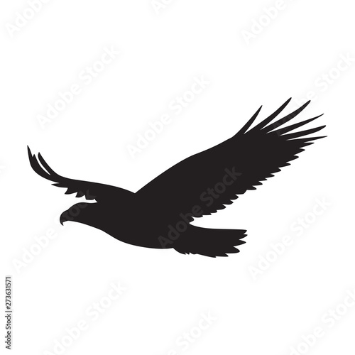 Vector silhouette of the Bird of Prey in flight with wings spread Canvas Print