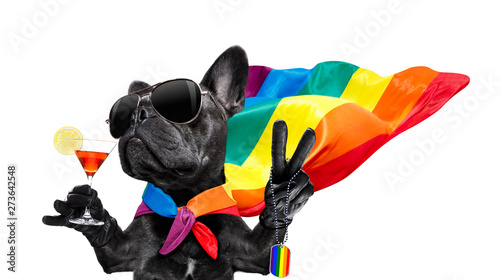 Recess Fitting Crazy dog gay pride dog