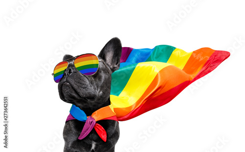 Tuinposter Crazy dog gay pride dog