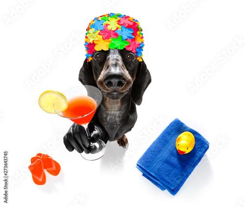 Chien de Crazy summer vacation holiday dog