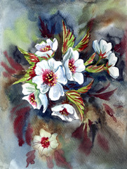 Panel Szklany Kwiaty White flowers of Chisima sakura, watercolor painting in an expressive manner.