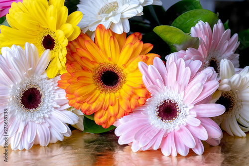 gerbera flowers of different colors on a shiny Fototapet