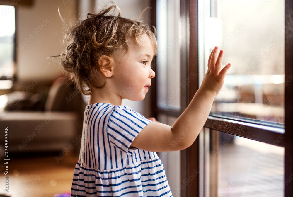 Fototapety, obrazy: A toddler girl standing by window indoors at home, looking out.