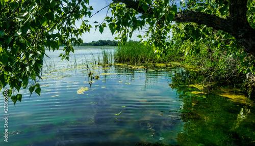 Fotografie, Obraz  Marshland nature of Louisiana. US Natural Parks