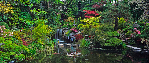 FototapetaAn impressive Japanese water garden with colourful display of Acers and Maples shrubs and plants