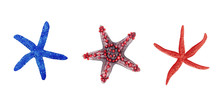 Hand Drawn Watercolor Illustration Set Of Colorful Bright Blue And Red Tropical Starfish Isolated On White Background