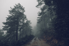 Forest Road Fog And Rain In Th...