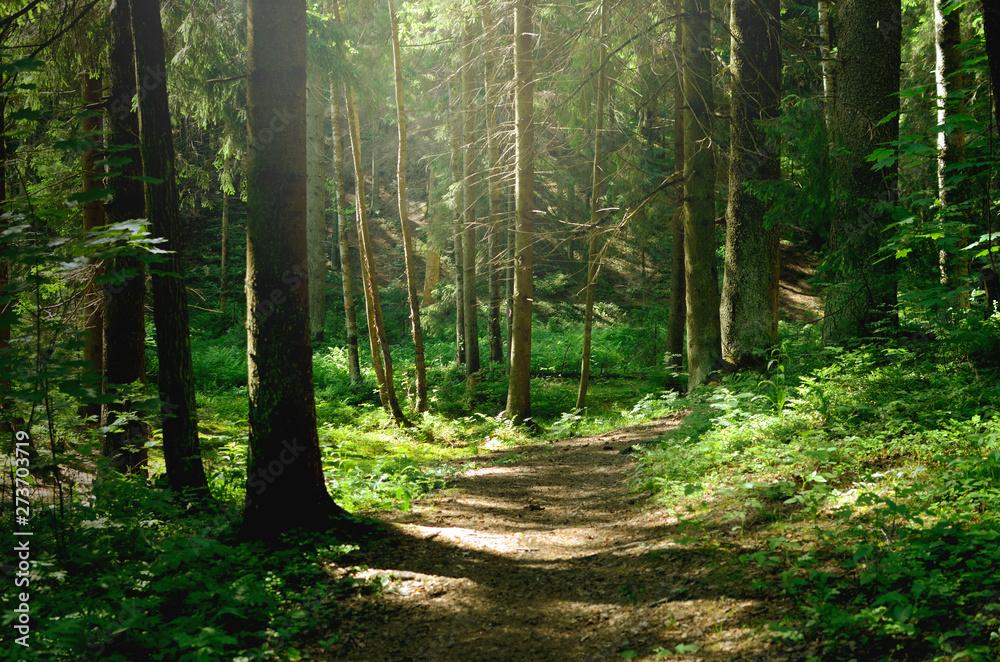 Letni słoneczny las