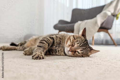 Obraz Tabby cat on floor in living room - fototapety do salonu