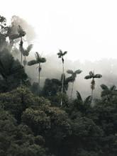 Mashpi Cloud Forest