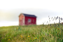 Dandelions And Grass Growing Near Tiny Red Building In Newfoundland Countryside