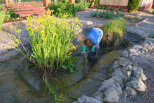 White Middle-aged Woman Cleans A Artificial Fish Pond From Slime And Water Plants.