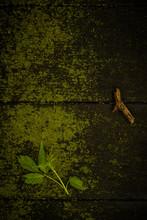 Moss Wood And Fresh Leaf