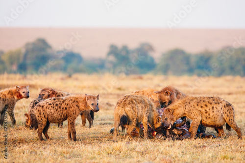 Cadres-photo bureau Hyène Hyenas pack in Africa