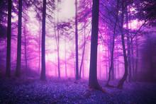 Mystic Fantasy Violet Colored ...