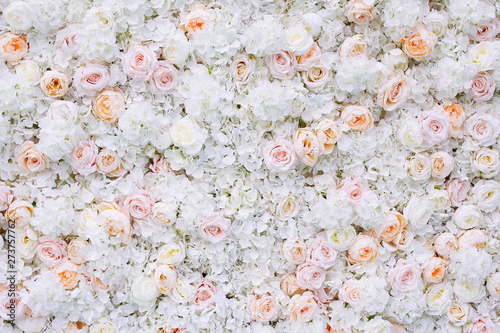 Fotobehang Bloemen Flowers wall background with white and light orange roses.