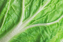 Leaf Of Fresh Chinese Cabbage ...