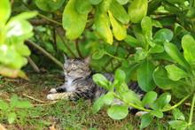ハワイオアフ島 ハナウマ湾の野良猫