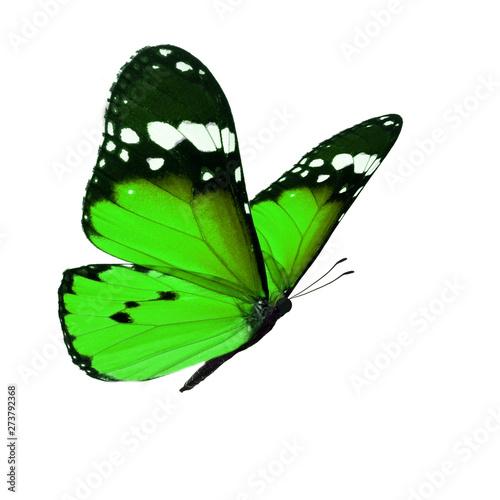 Fotografie, Obraz  Beautiful monarch butterfly