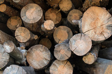 Stacked Firewood Chopped And Placed In A Pile; Sawed Log Pieces Ends Showing