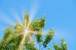 canvas print picture - Baum, Himmel und Sommer