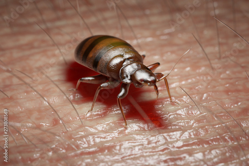 Tela  3d rendered medically accurate illustration of a bed bug on human skin