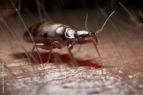 Fotografía 3d rendered medically accurate illustration of a bed bug on human skin