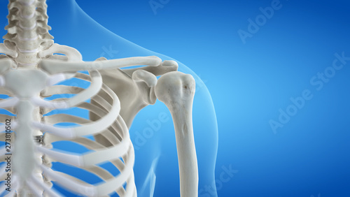 Fototapeta 3d rendered medically accurate illustration of the shoulder joint obraz
