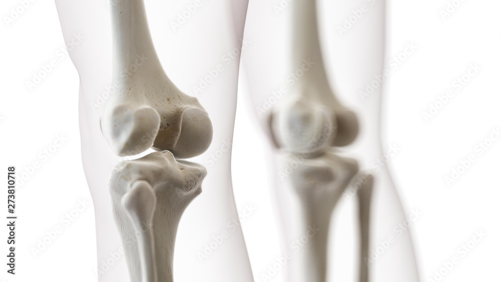 Fototapety, obrazy: 3d rendered medically accurate illustration of the knee joint