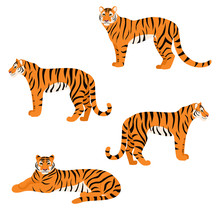 Set Of Tigers Isolated On Whi...