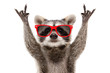 Leinwandbild Motiv Portrait of a funny raccoon in red sunglasses showing a rock gesture isolated on white background