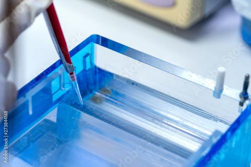 Fotografie, Obraz Molecular technique gel electrophoresis for DNA sample method decrypt the genetic code