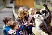 Cute Toddler Girl, Two Little School Kids Boys And Young Mother Feeding Lama And Alpaca On A Kids Farm. Three Children Petting Animals In The Zoo. Woman With Sons, Daughter Together On Family Weekend