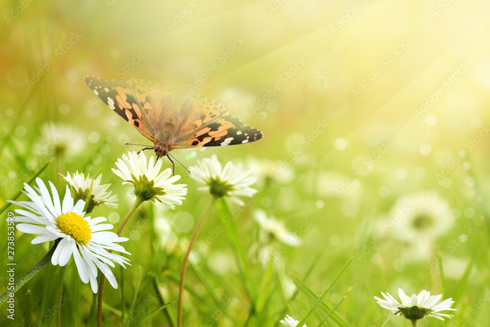 Schmetterling 541