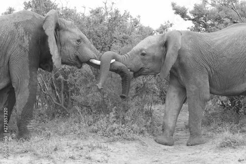 Fotobehang Olifant mother and baby elephant