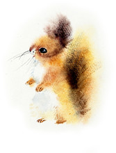 Red Squirrel. Watercolor Hand ...