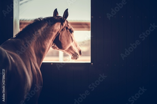 Fotomural Horse in a Stable Box