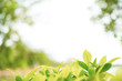 Closeup nature view bush tree with top copy space blurred background