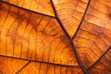 Dry Leaf Texture And Nature Background. Surface Of Brown Leaves Material.