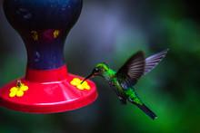 Colibris Im Nationalpark In Mo...