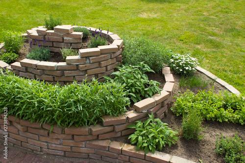 obraz lub plakat herb spiral in the garden
