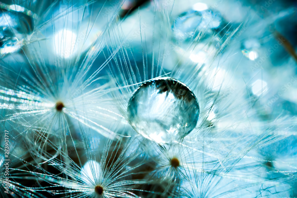 Fototapety, obrazy: Beautiful dew drops on a dandelion seed. Macro. Beautiful soft light blue and violet background. Selective focus. Background with copy space.