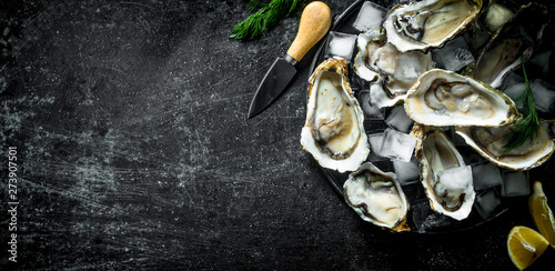 Photo Appetizing raw oysters with ice cubes and a knife.