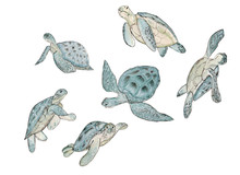 Set Watercolor Real Sea Turtle On White Background.Summer Exotic Print.