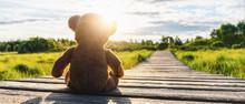 Teddy Bear Sitting On A Path I...
